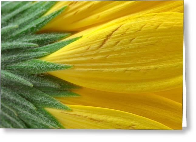 Yellow Daisy Macro Greeting Card