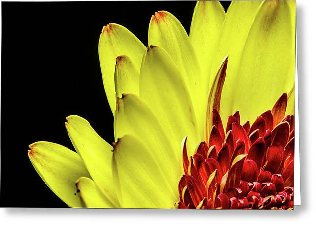 Yellow Daisy Peeking Greeting Card