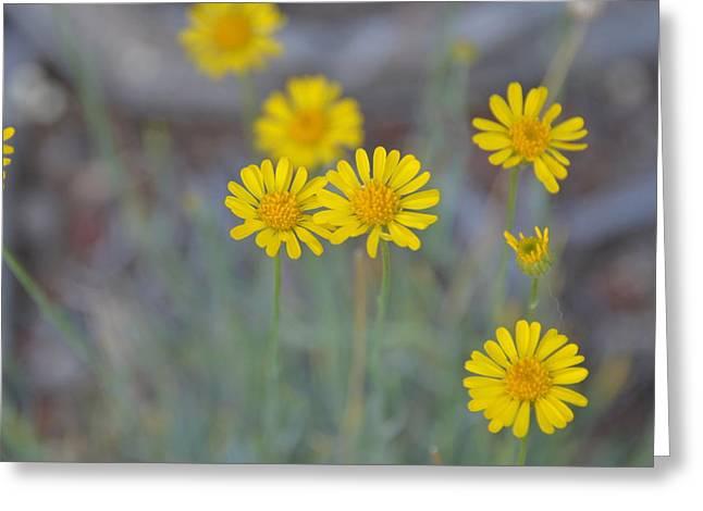 Yellow Daisy Wildflowers Greeting Card by Linda Larson