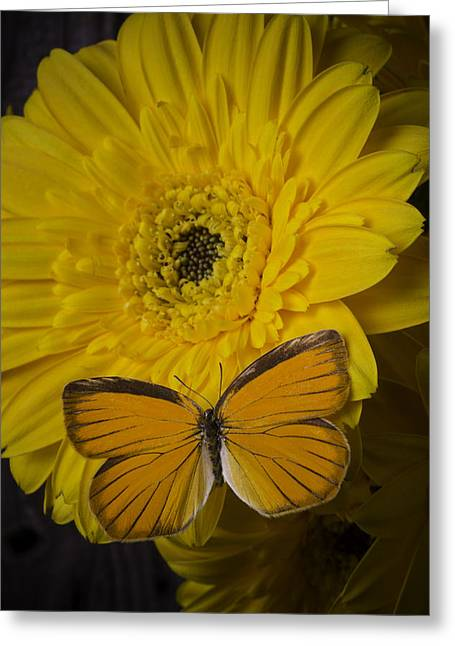 Yellow Daisy With Orange Butterfly Greeting Card by Garry Gay