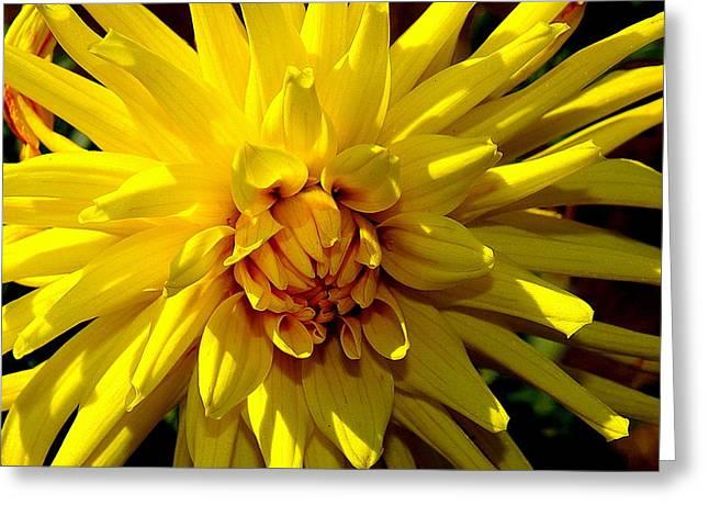 Yellow Daliha Greeting Card by Patrick  Short