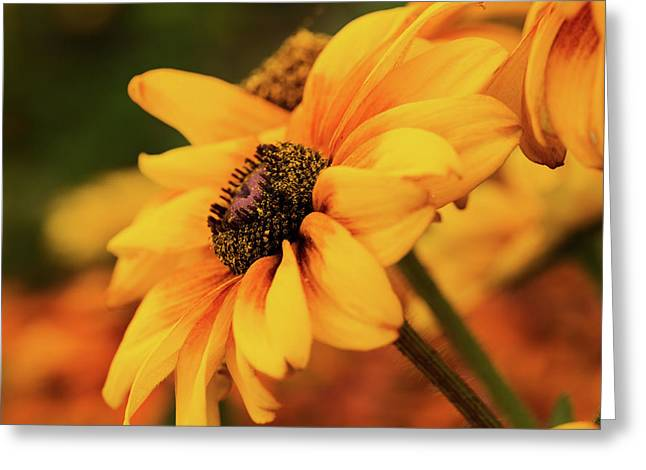 Greeting Card featuring the photograph Yellow Dark by Mary Jo Allen