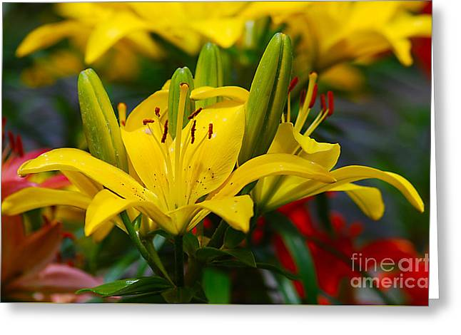 Greeting Card featuring the photograph Yellow Day Lily 20120614_55a by Tina Hopkins