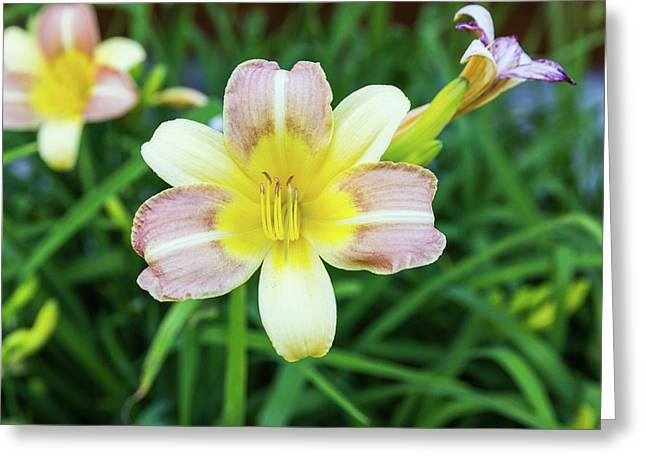 Yellow Daylily Greeting Card