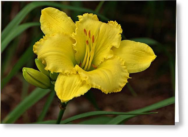 Yellow Daylily Greeting Card by Sandy Keeton