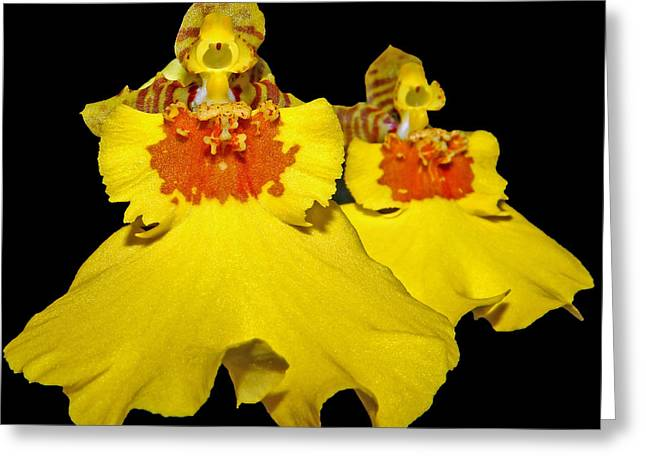 Greeting Card featuring the photograph Yellow Dresses by Judy Vincent
