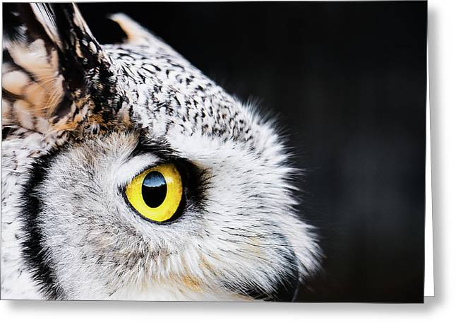 Yellow Eye Greeting Card
