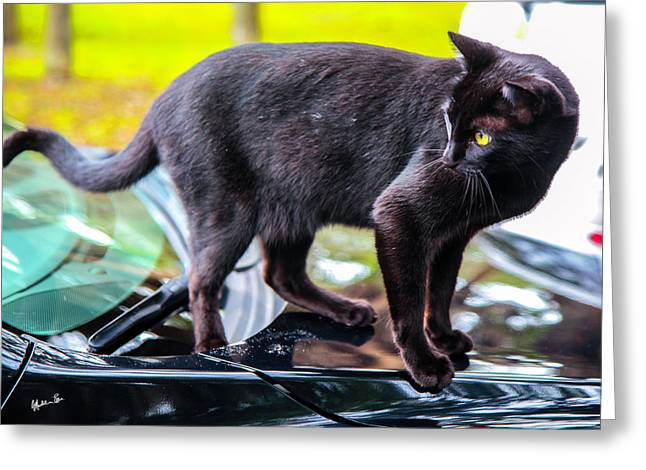 Greeting Card featuring the photograph Yellow Eyed Cat by Madeline Ellis
