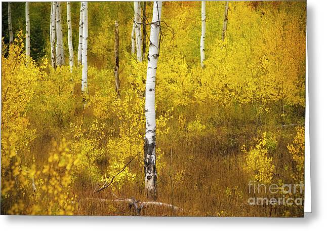 Greeting Card featuring the photograph Yellow Fall Aspen by Craig J Satterlee