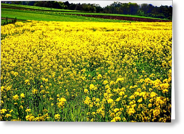 Yellow Field Greeting Card by Bill Cannon
