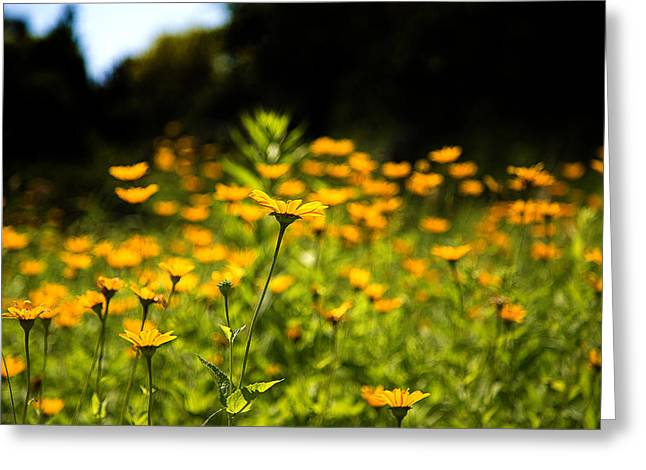 Yellow Field Greeting Card