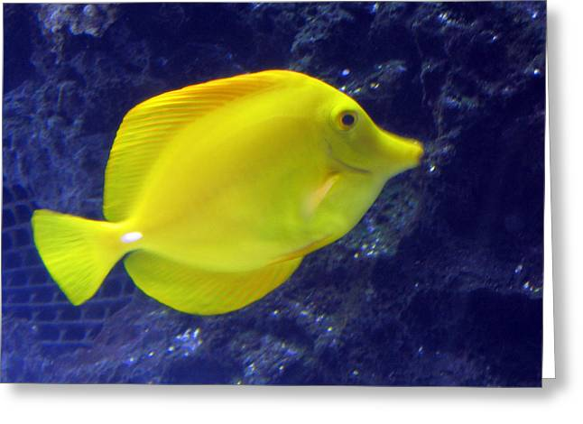 Greeting Card featuring the relief Yellow Fish by Suhas Tavkar