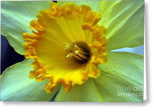 Yellow Floral Greeting Card by Clayton Bruster