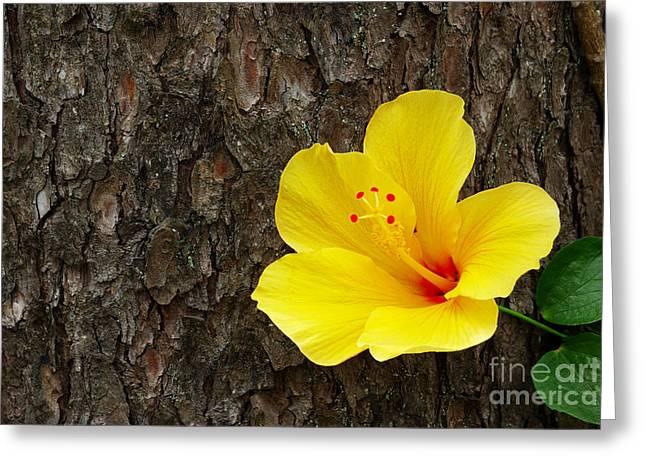 Yellow Flower Greeting Card by Carlos Caetano