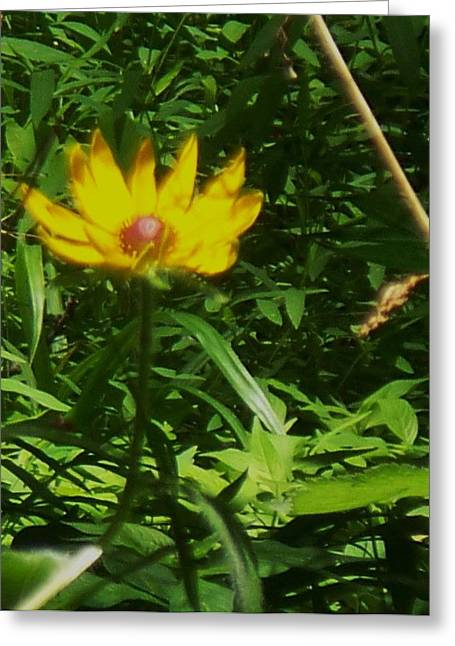 Yellow Flower Greeting Card by Eric  Schiabor