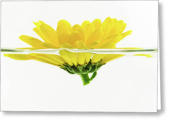 Yellow Flower Floating In Water Greeting Card