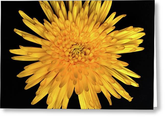 Yellow Flower Macro Greeting Card