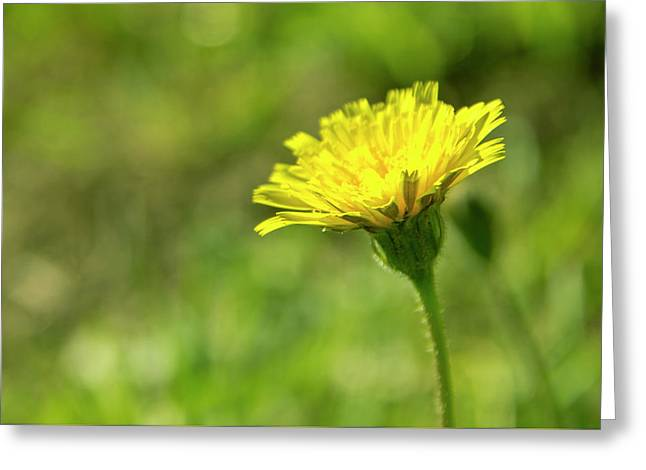 Greeting Card featuring the photograph Yellow Flower by Nikos Stavrakas