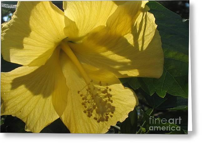 Yellow Flower Greeting Card by Paula Deutz