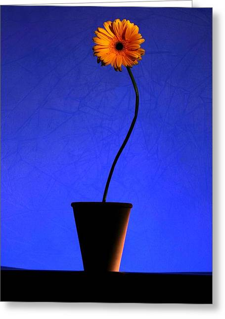 Greeting Card featuring the photograph Yellow Flower by Riana Van Staden