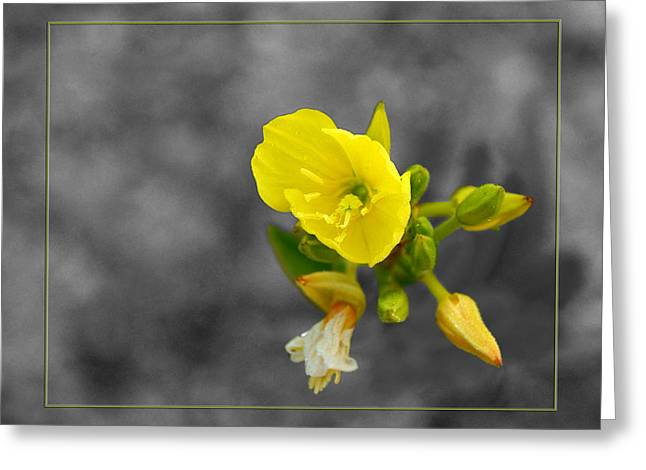 Yellow Flower Greeting Card by Robert Clayton
