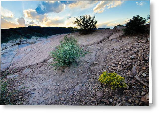 Yellow Flower Sunset, Fort Collins, Colorado Greeting Card
