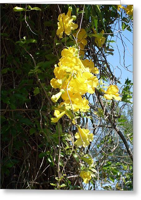 Yellow flowering vines photograph by warren thompson yellow flowering vines greeting card by warren thompson mightylinksfo