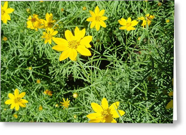 Greeting Card featuring the photograph Yellow Flowers by Beth Akerman