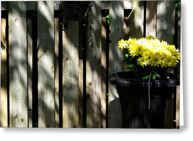 Yellow Flowers In A Black Flower Pot 2wc2 Greeting Card