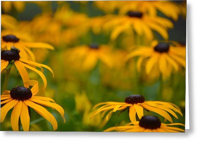 Yellow Flowers Greeting Card by Jimi Bush