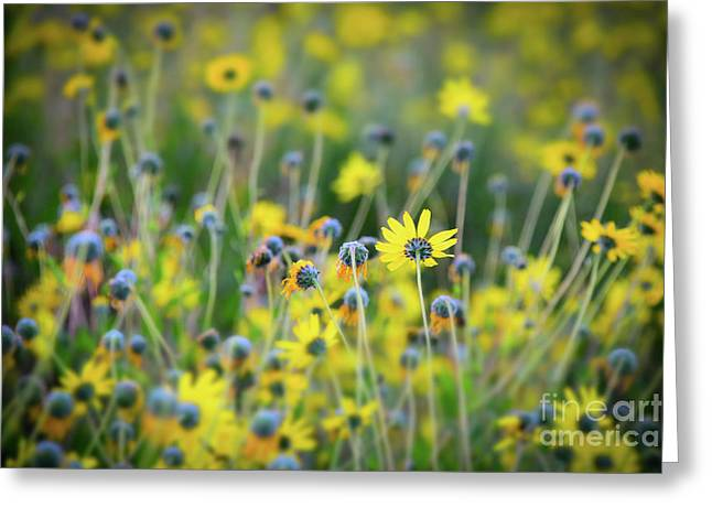 Greeting Card featuring the photograph Yellow Flowers by Kelly Wade