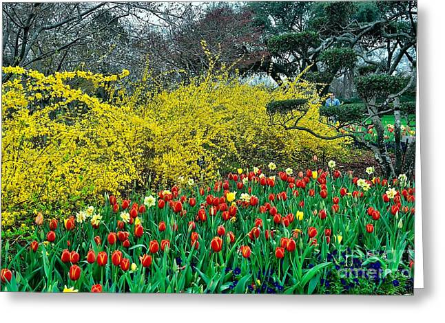 Greeting Card featuring the photograph Yellow Forsythia by Diana Mary Sharpton