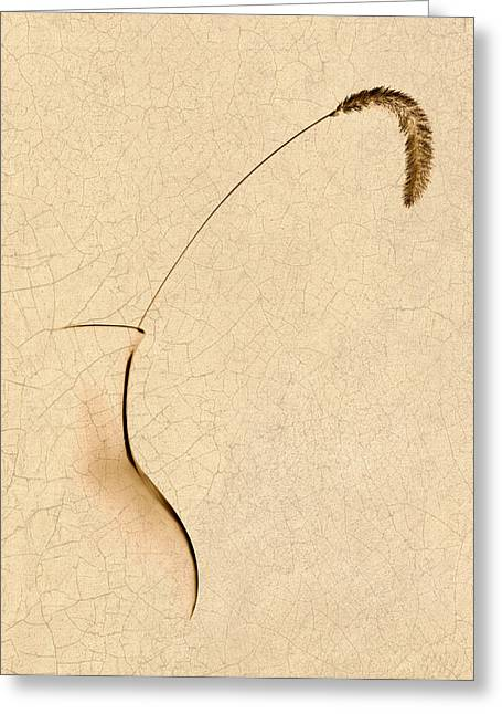 Yellow Foxtail Still Life Greeting Card by Tom Mc Nemar
