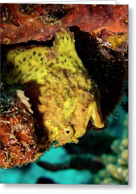 Yellow Frog Fish Greeting Card