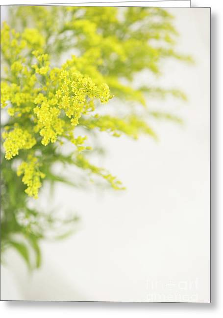Yellow Froth Greeting Card