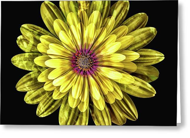 Yellow Gazania Multiple Exposure Abstract II Greeting Card