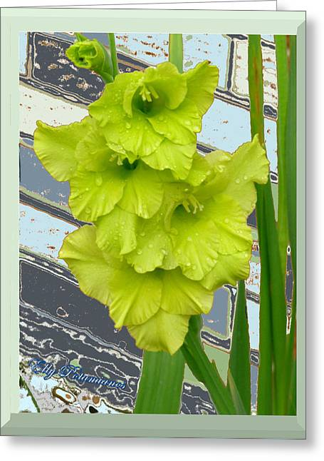 Yellow Gladiolas Greeting Card