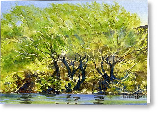 Yellow Green Willow Trees Greeting Card by Sharon Freeman