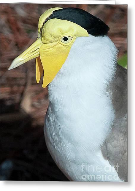 Yellow Headed Bird Greeting Card