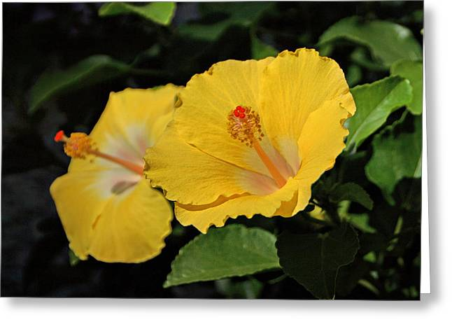 Yellow Hibiscus Greeting Card by Sandy Keeton