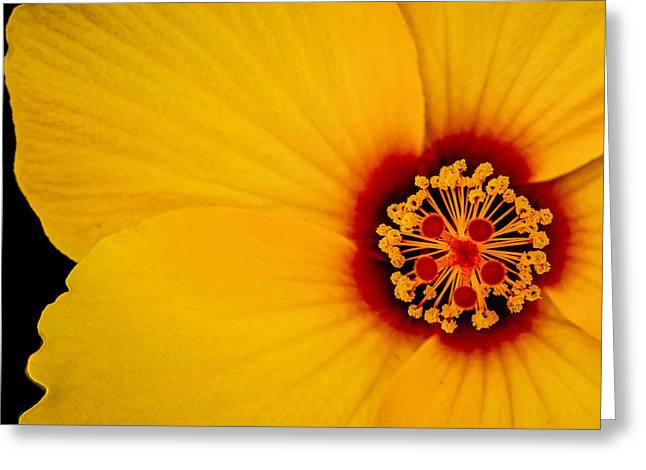 Greeting Card featuring the photograph Yellow Hibiscus Squared by TK Goforth