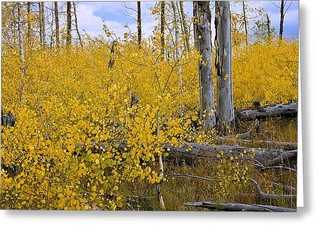 Yellow In Grand Teton Greeting Card
