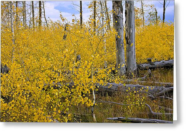 Greeting Card featuring the photograph Yellow In Grand Teton by Ken Barrett
