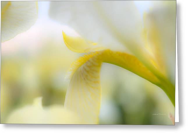 Yellow Iris 1 Greeting Card by Leland D Howard