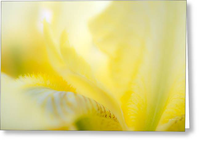 Yellow Iris 2 Greeting Card by Leland D Howard
