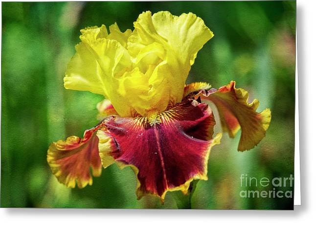 Greeting Card featuring the photograph Yellow Iris by Craig Leaper