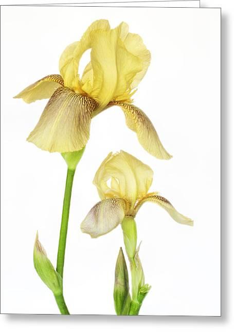 Yellow Iris Pair Greeting Card by David and Carol Kelly