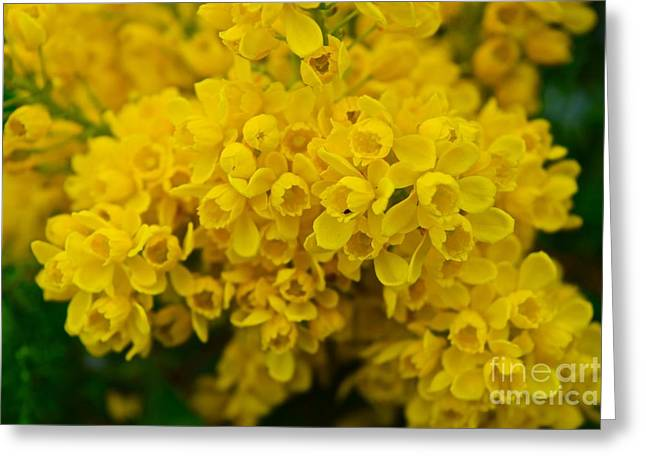 Yellow Is The Joy Of Spring Greeting Card by Debra Banks