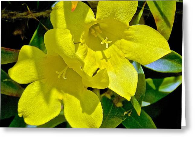 Greeting Card featuring the photograph Yellow Jessamine At Pilgrim Place In Claremont-california by Ruth Hager