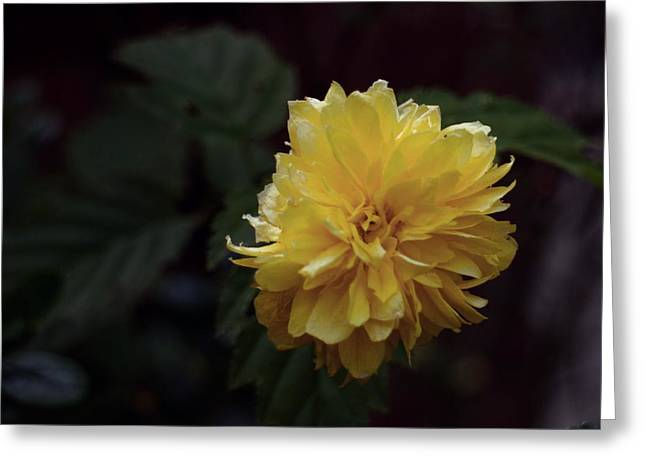 Yellow Greeting Card by Keith Elliott